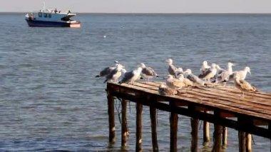 Vissershaven in de Donaudelta — Stockvideo