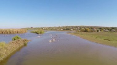 Wild Danube Delta aerial — Stock Video