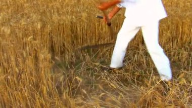 Farmer reaping wheat with a scythe — Stock Video