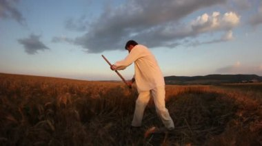 Peasant reaping wheat with a scythe — Stock Video