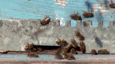 蜂の巣 — ストックビデオ
