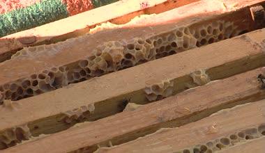 養蜂家 — ストックビデオ