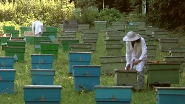 Beekeepers at work — Stock Video