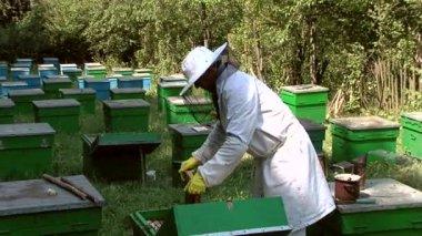 養蜂家の仕事で — ストックビデオ