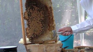 蜂蜜の抽出 — ストックビデオ