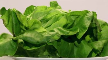 Rotating of fresh wet lettuce — Stock Video