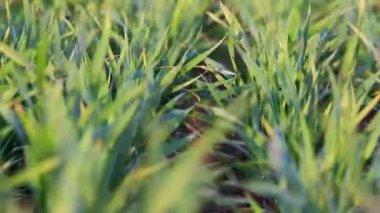 Green field landscape — Stok video