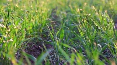 пейзаж зеленого поля — Стоковое видео