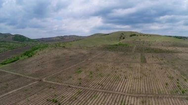 Beautiful vineyard landscape with dramatic sky, aerial view — Stock Video