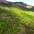 Aerial view mountain valley covered with forest — Stock Video #72624155