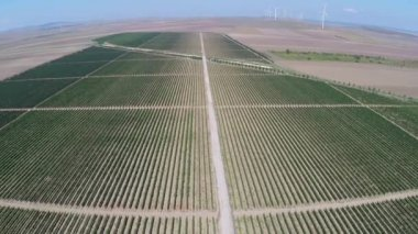 Beautiful vineyards landscape with wind turbines in the background, aerial view — Stock Video