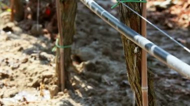 Vineyard irrigation — Stock Video