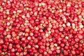 Scattering of forest berries a cowberry — Stock Photo