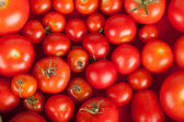Freshly picked tomatoes in a box — Stock Photo