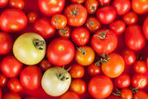 Freshly picked red tomatoes in a box plus two green — Stock Photo