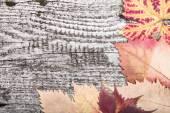 Gele herfstbladeren op de achtergrond een donker oud hout — Stockfoto