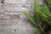 Old wooden background with pine branch, image of flooring board  — Stock Photo