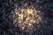Autumn leaves illuminated by a ray. background — Stock Photo