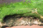 Overwoekerd door algen stone — Stockfoto