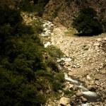 Mountain river. Stones. Green plants. Toned. Dramatic — Stock Photo #58809239