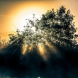 Dawn light through the bush on the river bank — Stock Photo #58893947