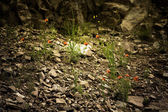Red flowers among the stones. Toned. Dramatic — Stock Photo