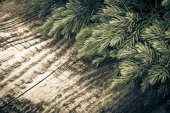 Christmas tree strewn on old wood. Tinted — Stock Photo