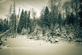 Winter forest covered with snow. tinted — Stock Photo