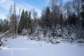 Zimowy las pokryte śniegiem. — Zdjęcie stockowe