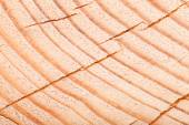 Cracked heartwood. Pine. tinted — Stock Photo