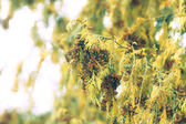 Yellow branches of the tree. Toned — Stock Photo