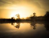 Misty dawn over the river. The sun's rays from behind a tree — Stockfoto