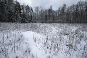 Snow-covered clearing in the forest — Стоковое фото