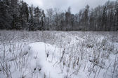 Snow-covered clearing in the forest — Stock fotografie