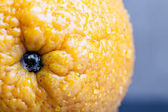 Orange with water drops on the skin close-up on a light backgrou — Stock Photo