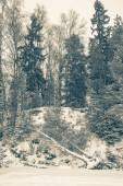 Snowy forest with birch felled by wind — Foto Stock