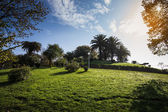 Sunny day in the park. Grass, trees, bushes, clouds. Toned — Stock Photo