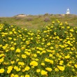 Meadow of yellow flowers among the green grass. Lighthouse in th — Stock Photo #67958829