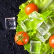 Red cherry tomatos, green salad and ice cubes on black wet table — Stock Photo #73574935