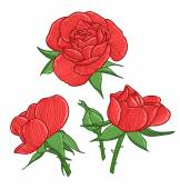 Red roses illustration — Stock Vector