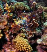 Korallenriff leben, Curaçao 2 — Stockfoto