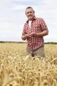 Farmer Inspecting Wheat Crop In Field — Stock Photo