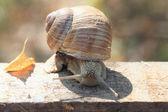 Snail fall. — Stock Photo
