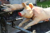 European Pigs on a rotisserie grill — Stock Photo