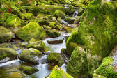 Torrent in the Bavarian Forest — Stock Photo