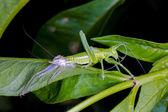 Zrození kobylku — Stock fotografie