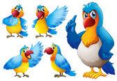 Parrot set — Stock Vector