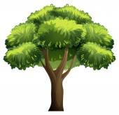 Oak tree — Vector de stock