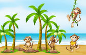 Monkey on beach — Stock Vector