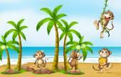 Monkey on beach — Stock Vector